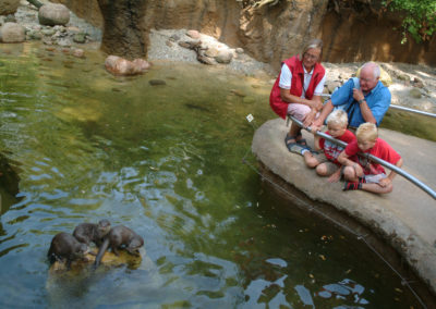 Asian otter enclosure Emmen Zoo