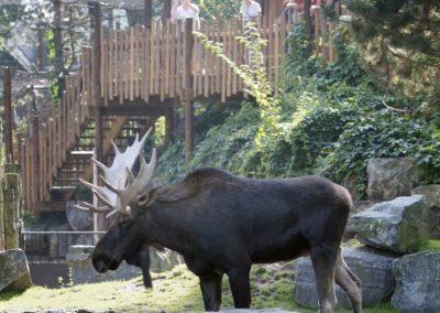 Walkway Moose enclosure Emmen Zoo