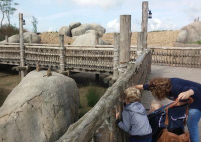 Meerkat enclosure Wildlands Adventure Zoo Emmen
