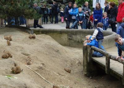Prairie dog enclosure Emmen Zoo
