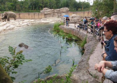 Elephant enclosure Wildlands Adventure Zoo Emmen
