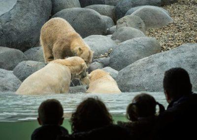 Polarbear enclosure Wildlands Adventure Zoo Emmen