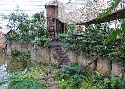 Jungle trail Wildlands Adventure Zoo Emmen